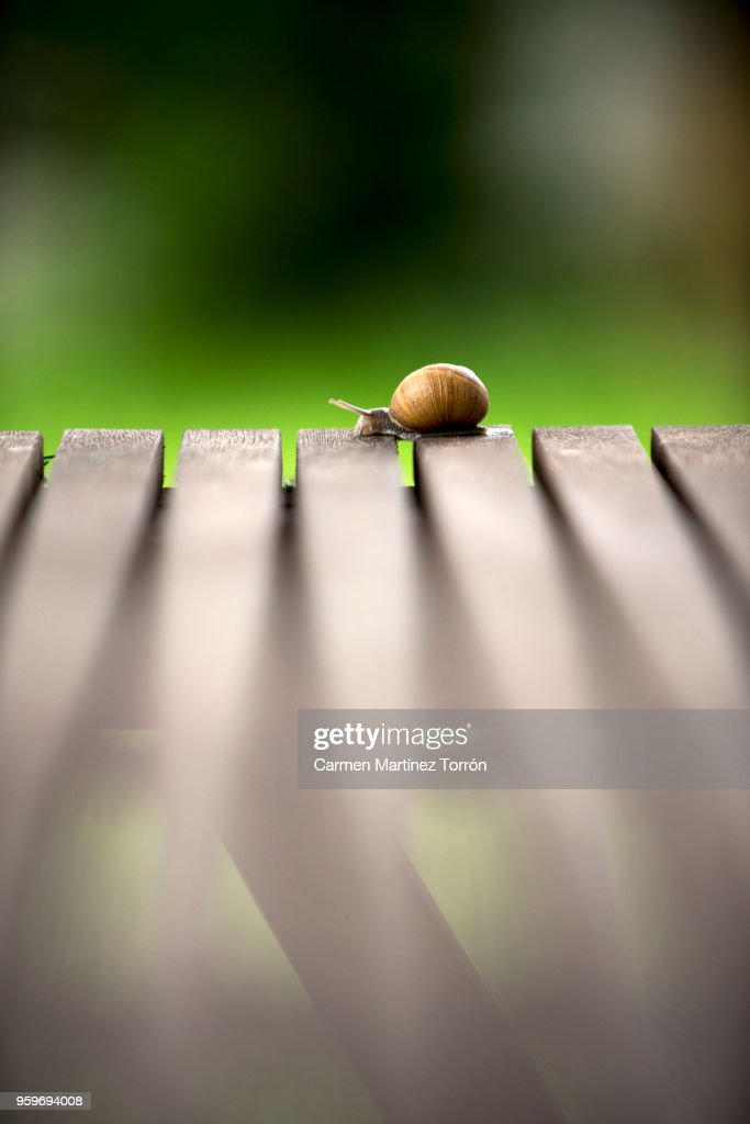 Garden snail crawling on table : Stock-Foto