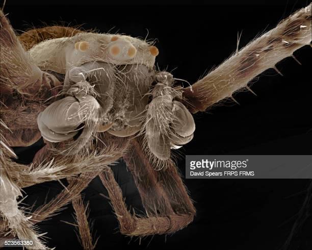 garden spider - male - ニワオニグモ ストックフォトと画像