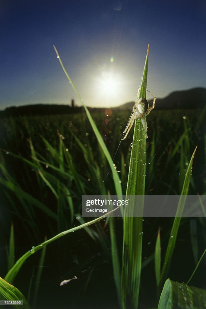 Garden spider on web at sunrise, close up : Stock Photo