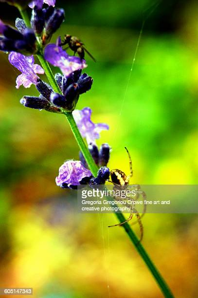 garden spider - gregoria gregoriou crowe fine art and creative photography stock-fotos und bilder