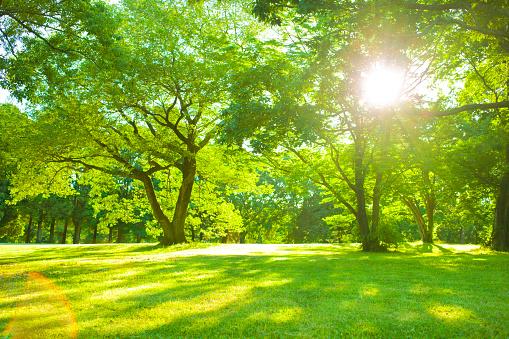 Garden sunlight 952004838