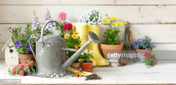 ガーデンツールと花の背景 - スコップ ストックフォトと画像