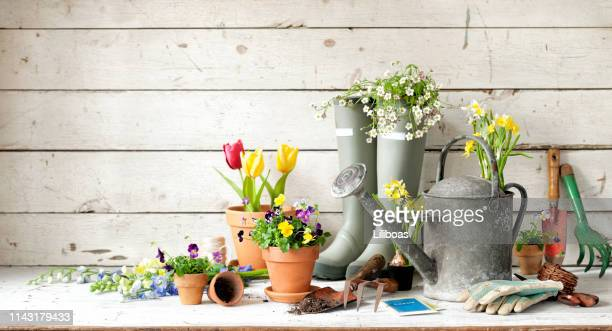 garden tools background - purple glove stock pictures, royalty-free photos & images