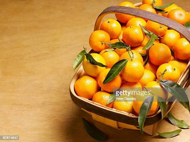 Garden trug filled with ripe oranges.