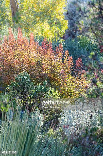 garden view - manzanita stock pictures, royalty-free photos & images