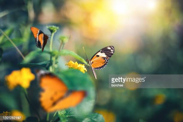 garden with butterflies - springtime stock pictures, royalty-free photos & images