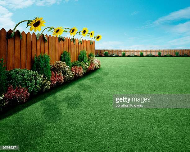 garden with sunflowers - lawn stock pictures, royalty-free photos & images