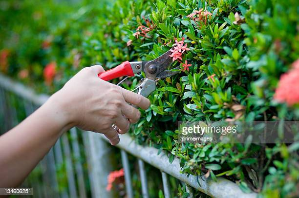 garden working - pruning shears stock photos and pictures