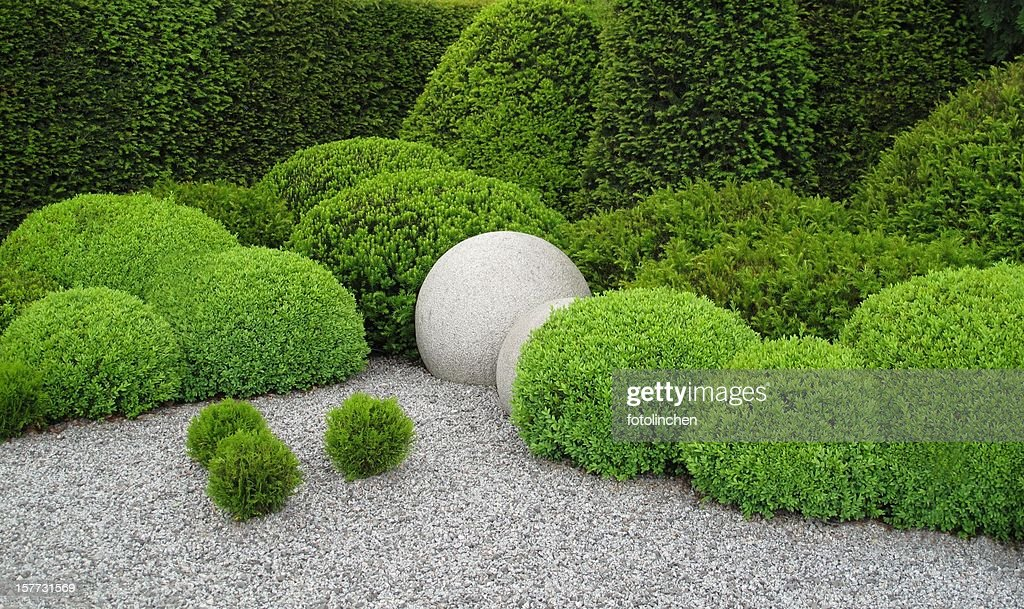 Gardendesign with buxus and yew : Stock Photo