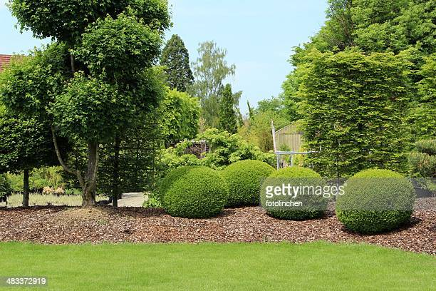 gardendesign with buxus - bush stock pictures, royalty-free photos & images