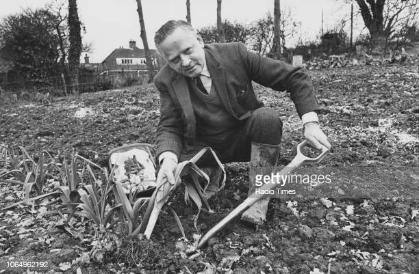 Gardener and television presenter Percy Thrower pictured picking vegetables photographed for Radio Times in connection with the television series...