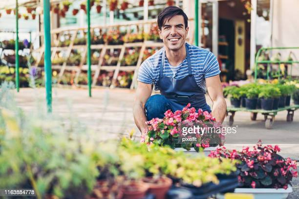 gardener arranging a flower planter - begonia stock pictures, royalty-free photos & images