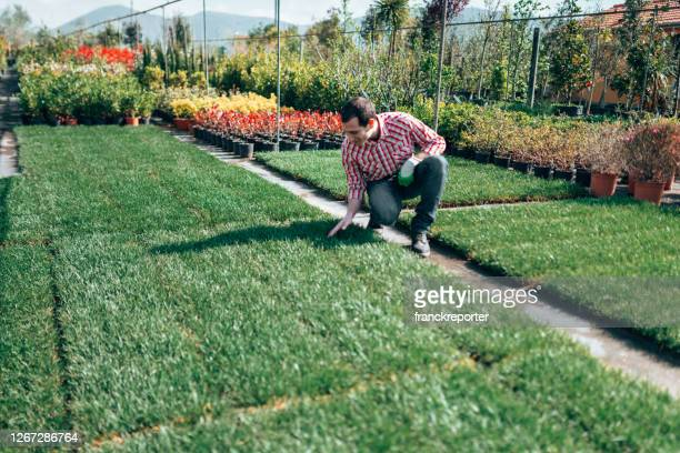 gardener checking the grass - turf stock pictures, royalty-free photos & images