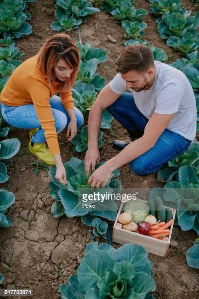 Gardener couple running small business