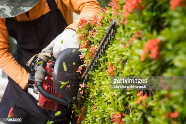gardener decorating garden - clippers stock pictures, royalty-free photos & images