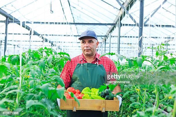 ガーデナー、野菜をケージにお入れください。 - 造園師 ストックフォトと画像