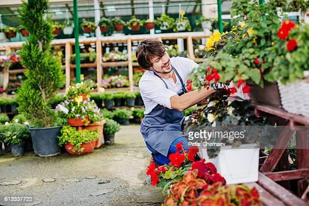 Gardener in a flower nursery