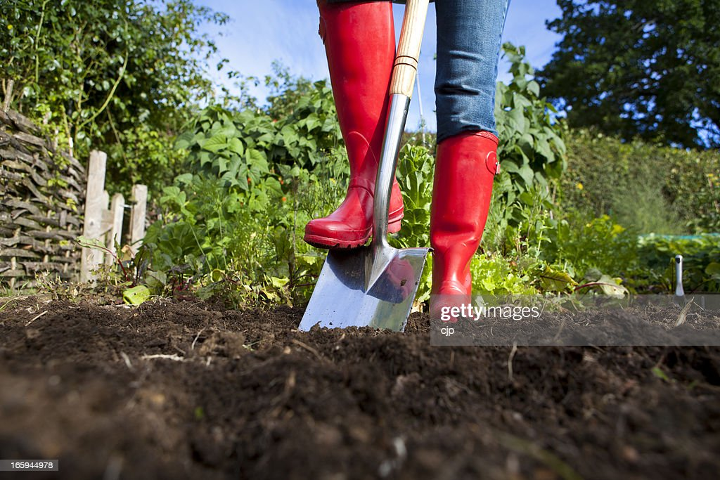 Gardener in red boots with spade in garden : Stock Photo