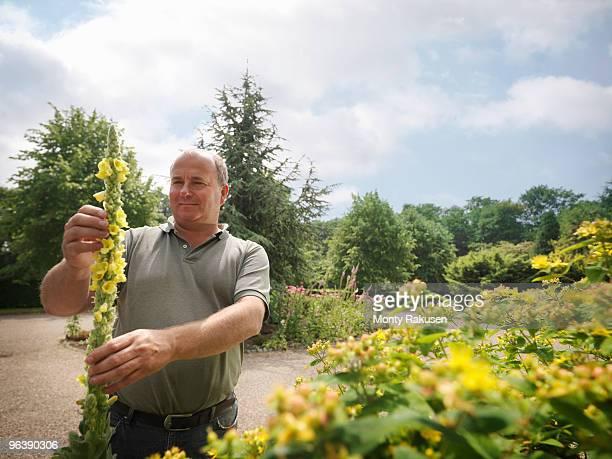 Gardener Inspecting Yellow Blooms