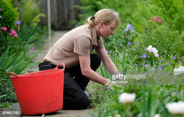 Gardener Karen Greenwood works at Mount Grace Priory ahead of a media event to launch a new arts and craft style garden created by garden designer...