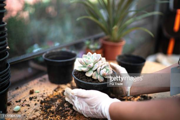 gardener planting flower on the vase - arranging stock pictures, royalty-free photos & images