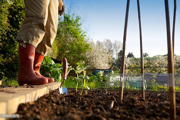 Gardener Planting in Vegetable Garden