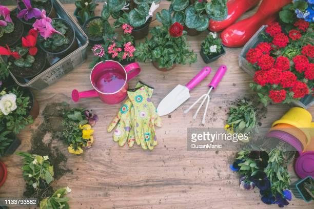 jardinier plantant la fleur de printemps - jardin fleuri photos et images de collection
