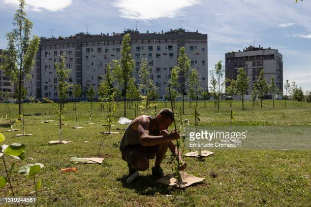 """Gardener plants a young hornbeam as part of the """"Forestami"""" project on May 21, 2021 in Milan, Italy. Forestami is an ambitious urban forestry project..."""