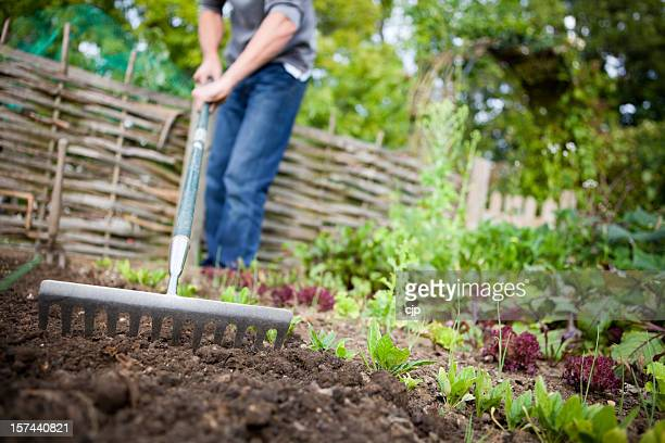 Gardener Preparing Raised Beds with Rake in Vegetable Garden