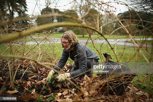 Gardener Ruth Calder clears weeds and dead leaves at Kew Gardens on March 1 2013 in Kew England Today marks the first day of Spring though the Met...
