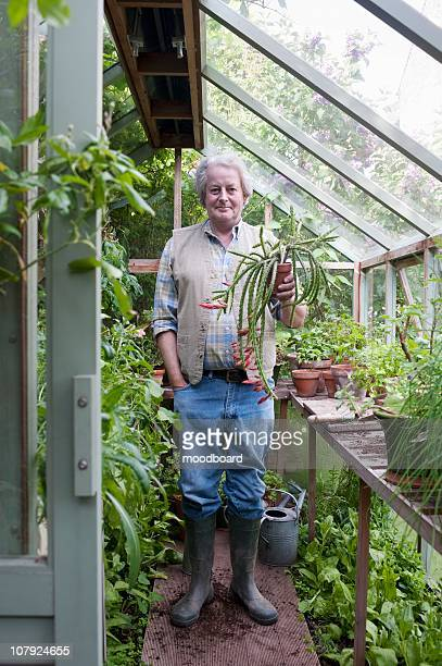 gardener stands in greenhouse holding potplant - streatham stock pictures, royalty-free photos & images