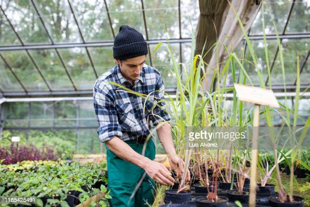 gardener taking care of plants at greenhouse - printed sleeve stock pictures, royalty-free photos & images