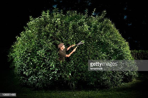 gardener trimming big bush - bush stock pictures, royalty-free photos & images