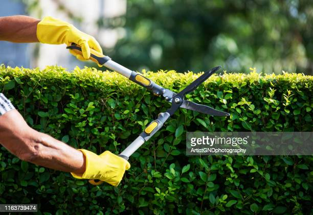 gardener trimming hedge in garden - cutting stock pictures, royalty-free photos & images