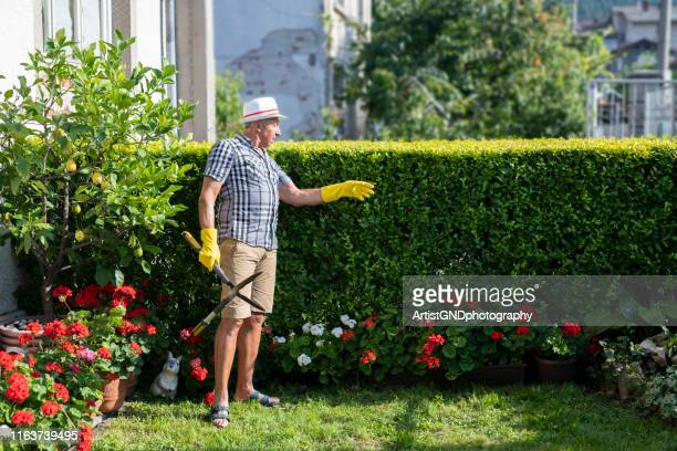 gardener trimming hedge in garden - hedge stock pictures, royalty-free photos & images