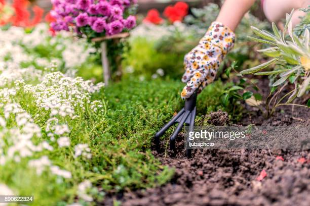 gardener working in the garden - flowerbed stock pictures, royalty-free photos & images