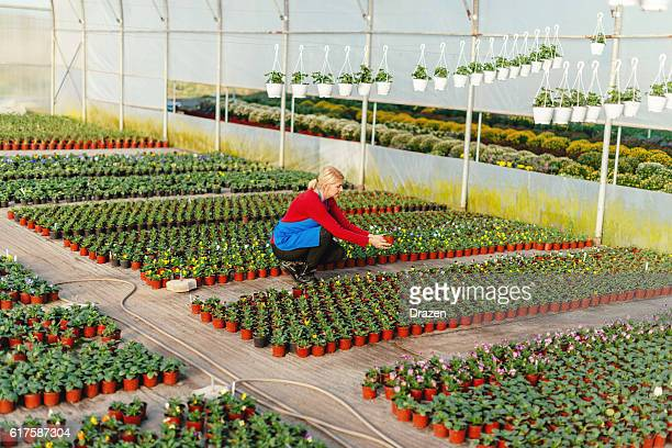 Gardener working with young plants in plant nursery
