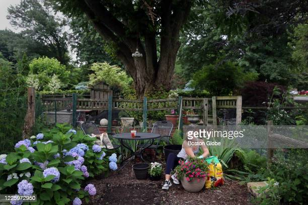 """Gardener works in her plot at the Fenway Victory Gardens in Boston, MA on July 08, 2020. She just got her plot on July 1, and said, """"it takes a..."""