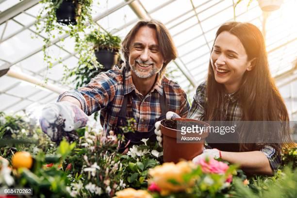 庭師は温室で植物のため気します。