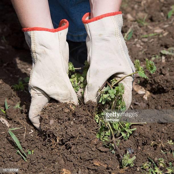 Jardinier de mains d'excellence d'autrefois