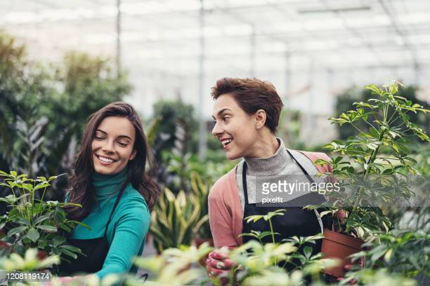 gardeners with lush green plants in the nursery - queensland umbrella tree stock pictures, royalty-free photos & images