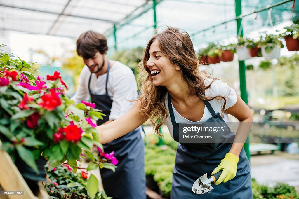 Gardeners working in a greenhouse : Stock Photo
