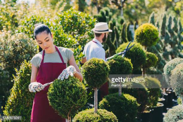 gardeners working in garden center - botanical garden stock pictures, royalty-free photos & images