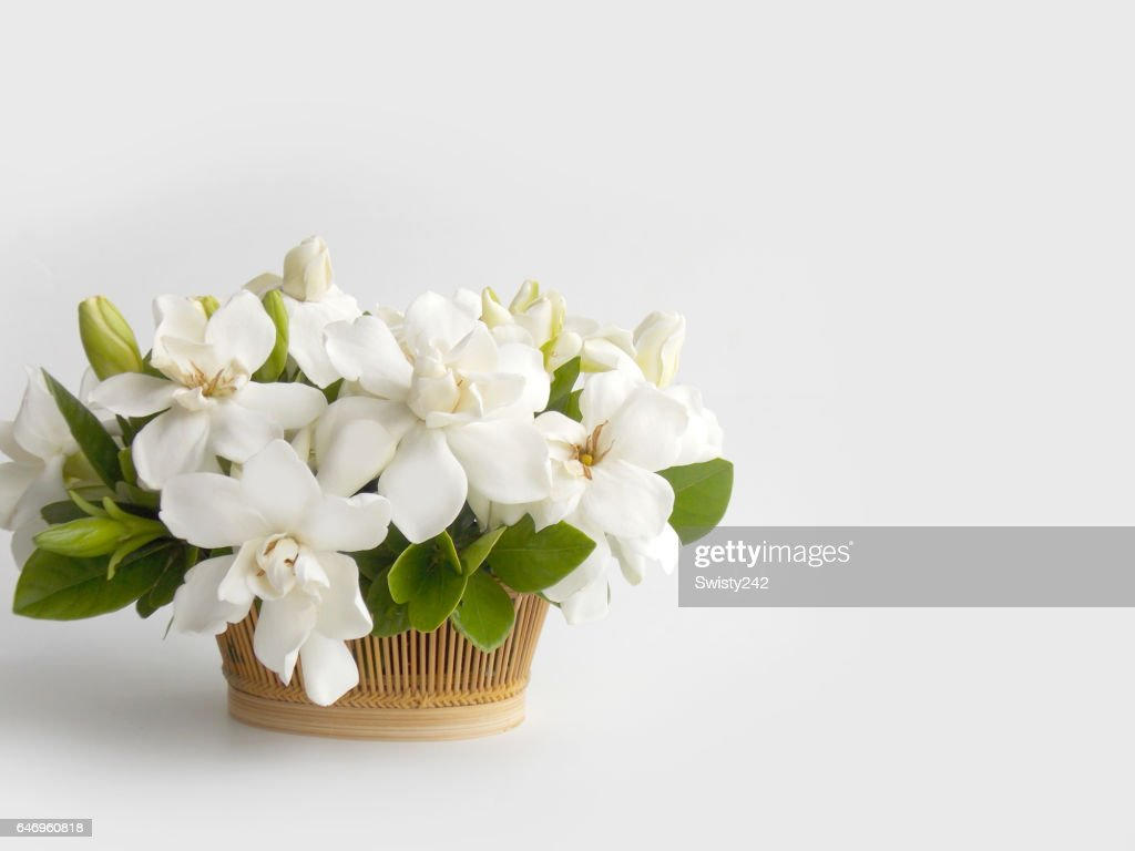 Gardenia Flower Bouquet Stock Photo | Getty Images