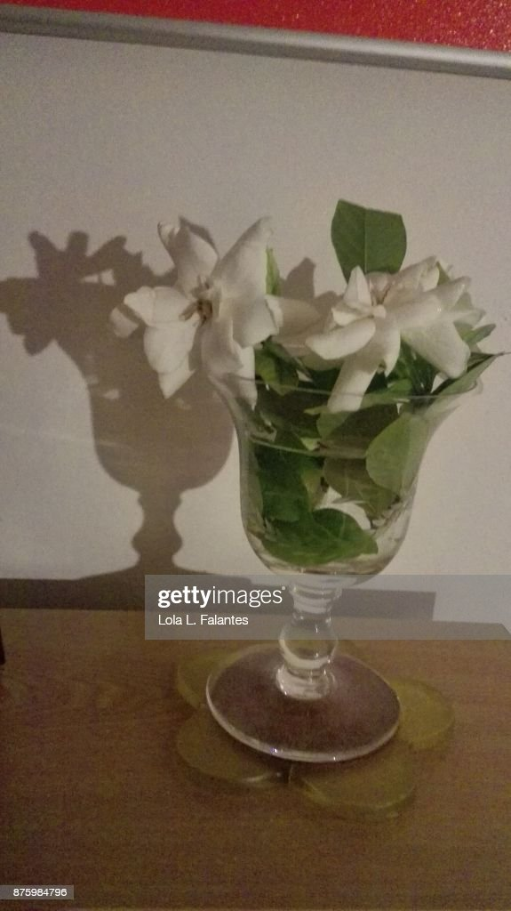 Gardenias flowers in a vase at home : Foto de stock