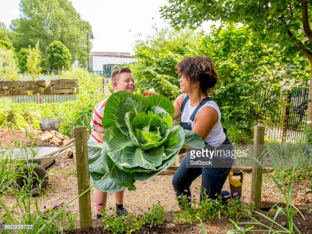 gardening at the farm community garden - developmental disability stock photos and pictures