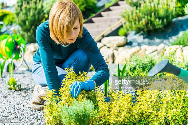 Gardening, attractive woman working in garden and planting seedlings