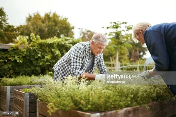 Tuinieren kan u helpen bouwen iets waar die je trots op bent