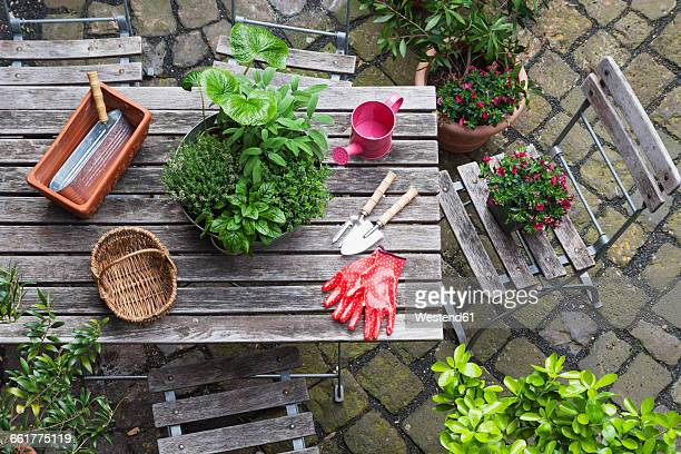 Gardening, different medicinal and kitchen herbs and gardening tools on garden table
