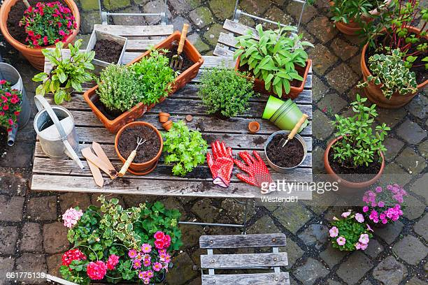 gardening, different medicinal and kitchen herbs and gardening tools on garden table - potting stock pictures, royalty-free photos & images